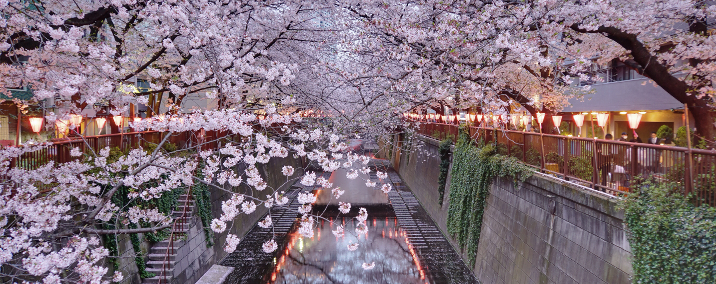 Dyed In Pink I Best Places To See Cherry Blossoms In Tokyo And Kyoto