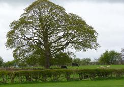 The Ginney Country Guest House - Penrith - Outdoor view